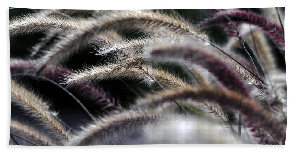 Clay Beach Towel featuring the photograph Fuzzy by Clayton Bruster