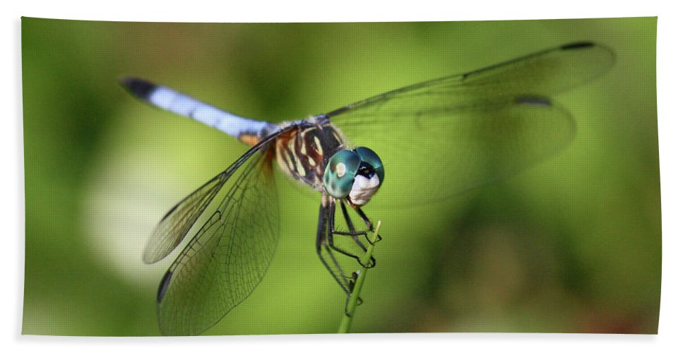 Dragonfly Beach Towel featuring the photograph Garden Dragonfly by Carol Groenen