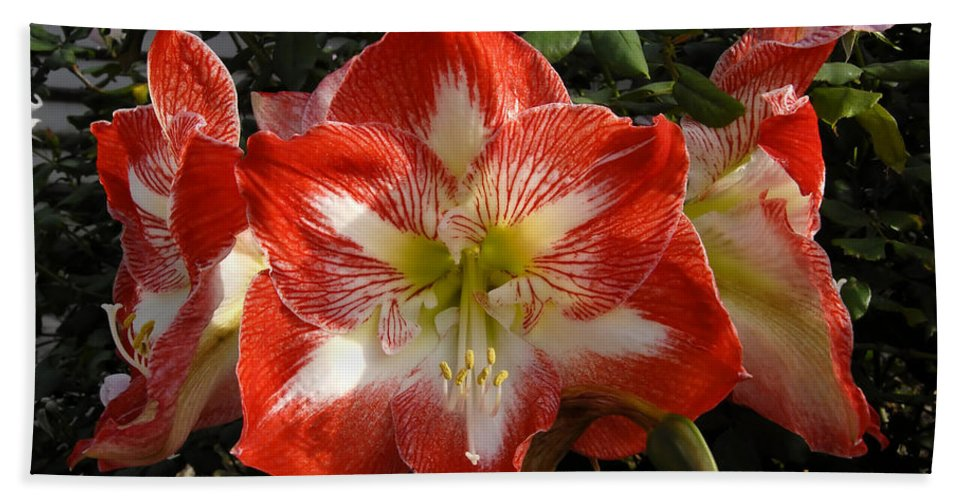 Garden Beach Towel featuring the photograph Garden Flowers by David Lee Thompson