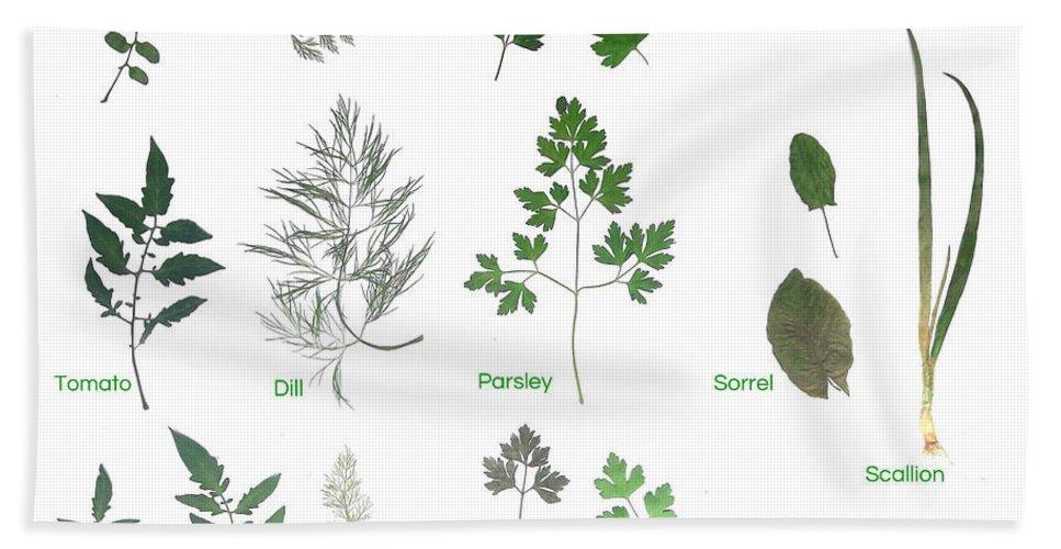 Garden Leaves Beach Towel featuring the photograph Garden Herbs by Tibi K