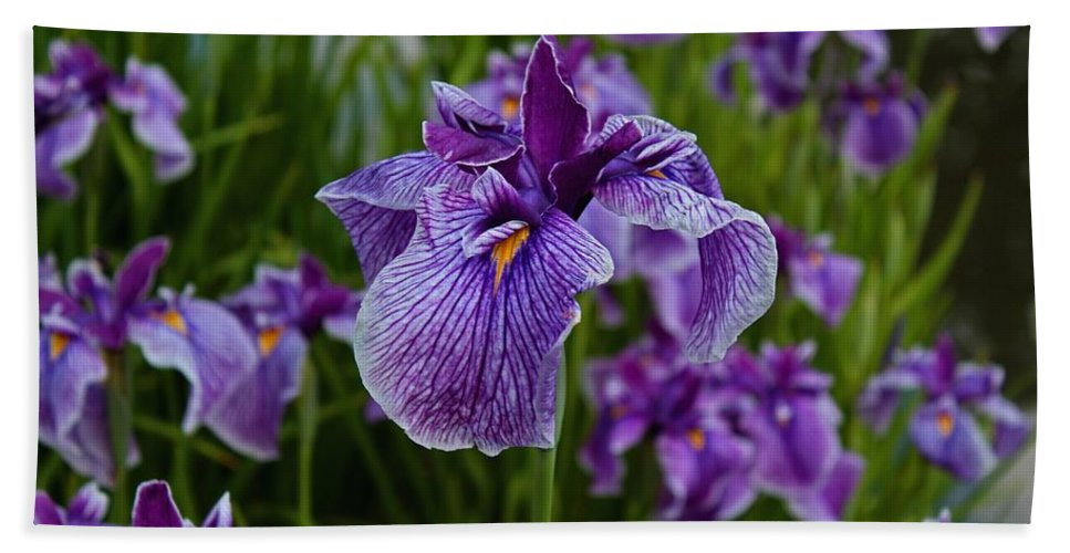 Iris Beach Towel featuring the photograph Garden Party by Michiale Schneider
