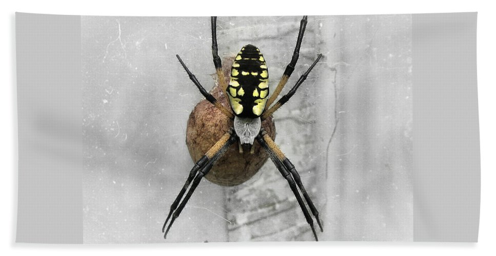 Spider Beach Towel featuring the photograph Garden Spider by Amber Flowers
