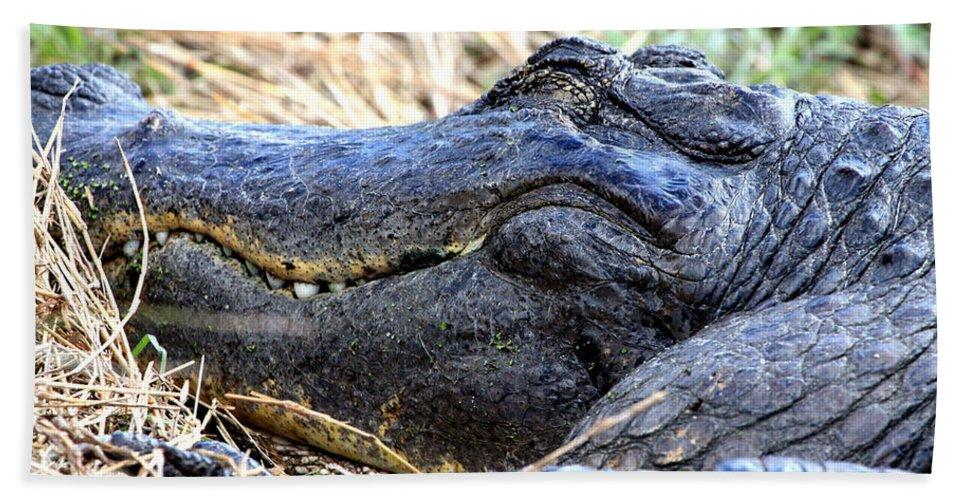 American Alligator Beach Towel featuring the photograph Gator Head by Barbara Bowen