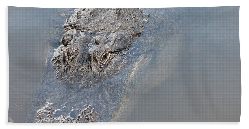 Alligator Beach Towel featuring the photograph Gator IIi by Stacey May