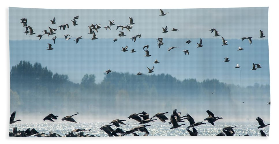 Birds Beach Towel featuring the photograph Geese And Gulls by Richard Kitchen