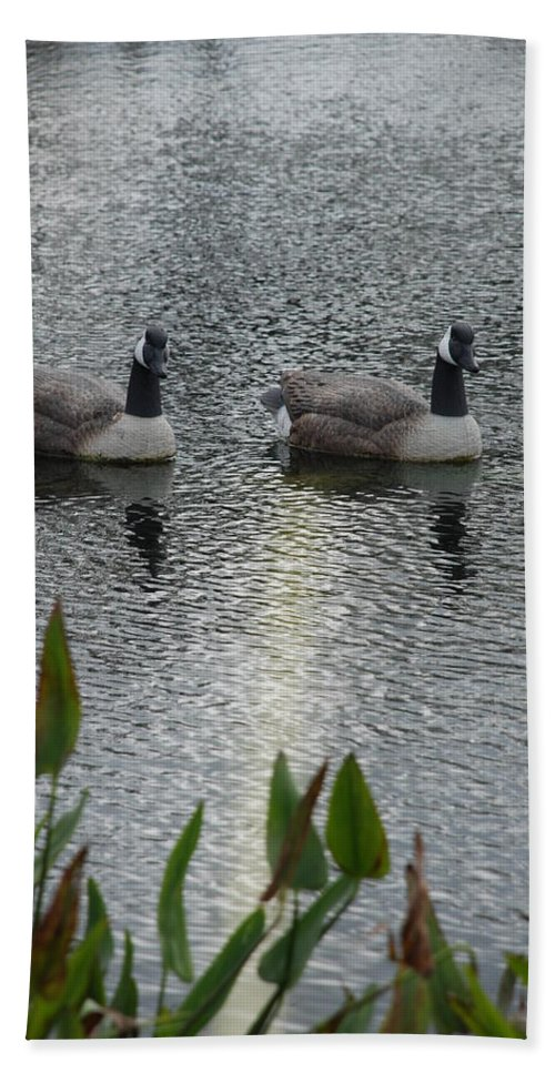 Water Beach Towel featuring the photograph Geese by Rob Hans