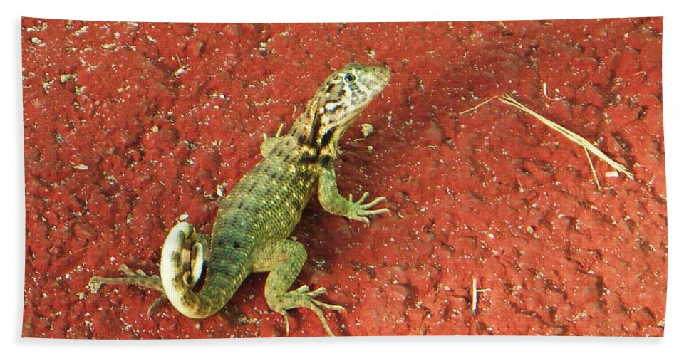 Lizard Beach Towel featuring the photograph Geico by Vesna Antic