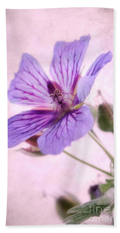 Geranium Maculatum Beach Towel featuring the photograph Geranium Maculatum by John Edwards