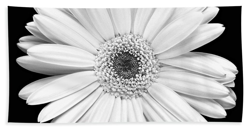 Gerber Beach Towel featuring the photograph Single Gerbera Daisy by Marilyn Hunt