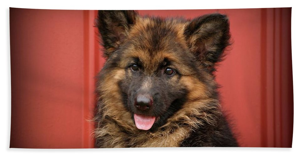 German Shepherd Beach Towel featuring the photograph German Shepherd Puppy - Queena by Sandy Keeton