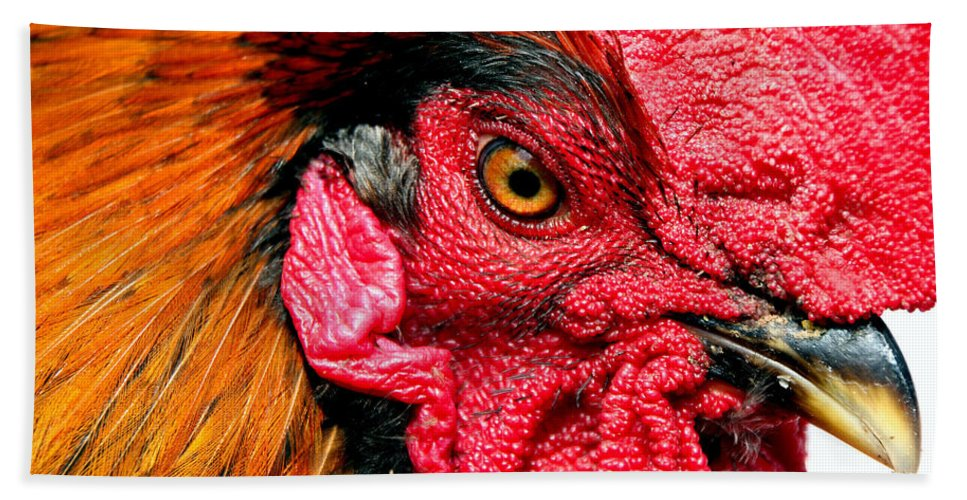Rooster Beach Towel featuring the photograph Get Outta My Face by Rebecca Morgan