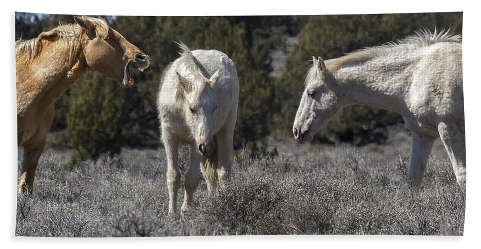 Wild Horses Beach Towel featuring the photograph Getting An Earful From Dad by Belinda Greb