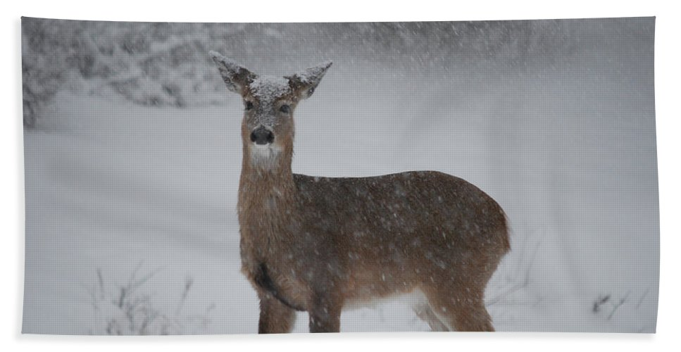 Deer Beach Towel featuring the photograph Getting Deeper by Lori Tambakis