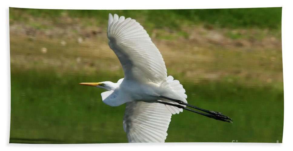 Giant Egret Beach Towel featuring the photograph Giant Egret Grace by Deborah Benoit