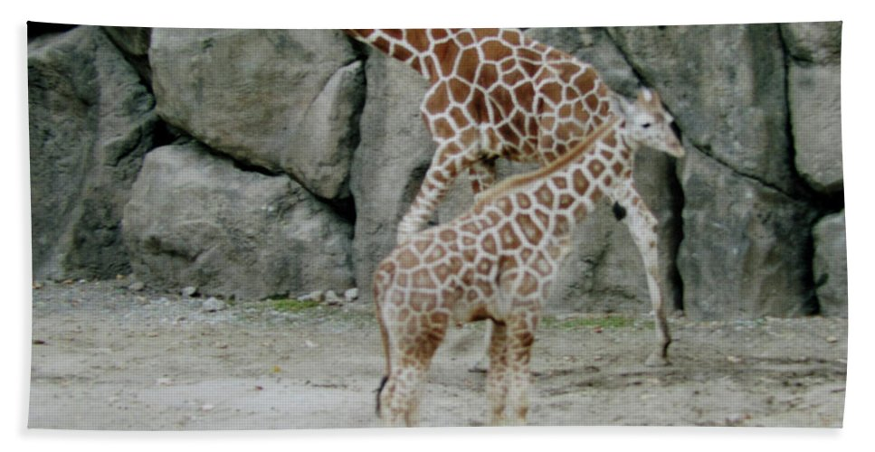 Zoo Beach Towel featuring the photograph Giraffe And Baby by Donna Brown