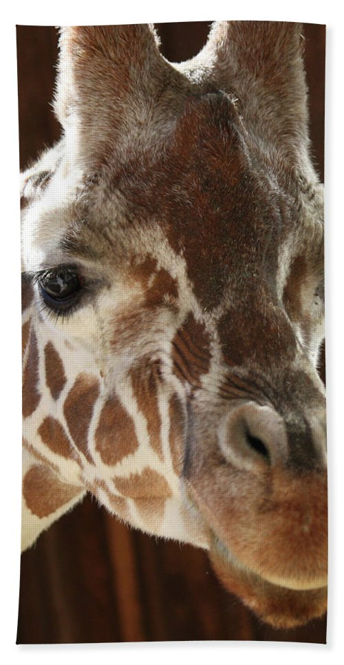 Maryland Beach Towel featuring the photograph Giraffe Taking A Peek by Ronald Reid
