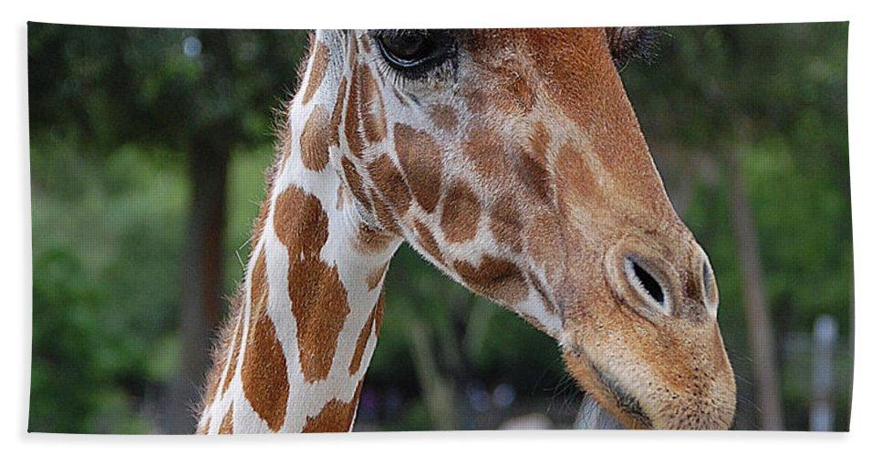 Giraffe Beach Towel featuring the digital art Giraffe Youth by DigiArt Diaries by Vicky B Fuller