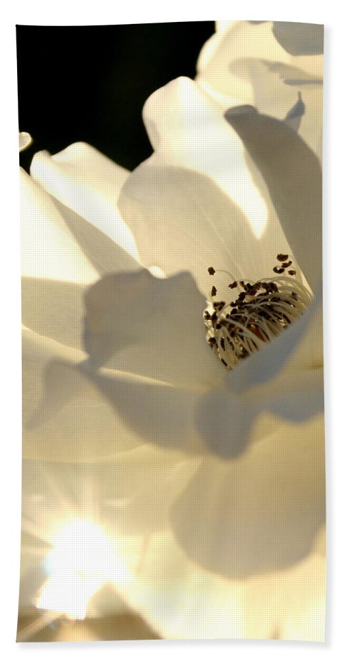 Gleaming White Rose Beach Towel featuring the photograph Gleaming White by Chris Brannen