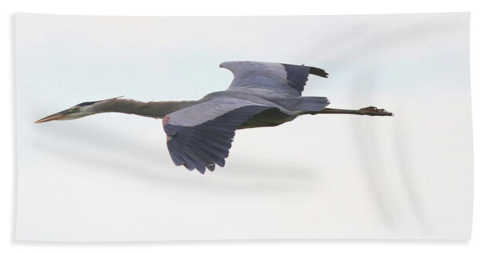 Great Blue Heron Beach Towel featuring the photograph Gliding by Bill Zajac