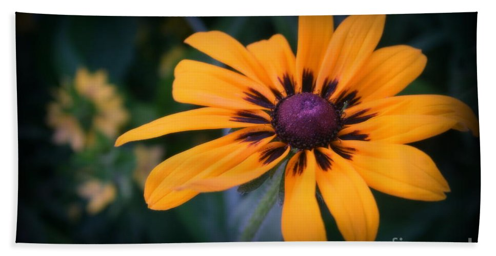 Daisy Beach Towel featuring the photograph Gloriosa Daisy by Kay Novy