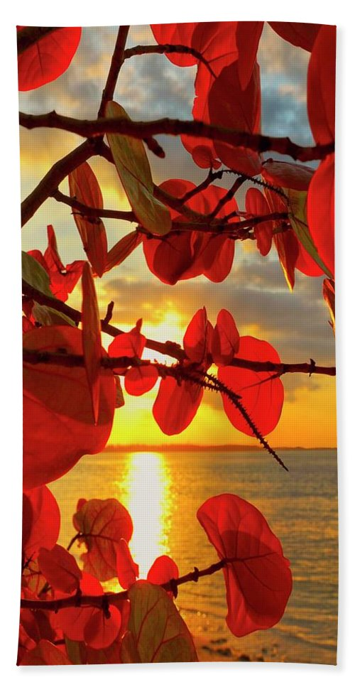 Beach Beach Towel featuring the photograph Glowing Red by Stephen Anderson