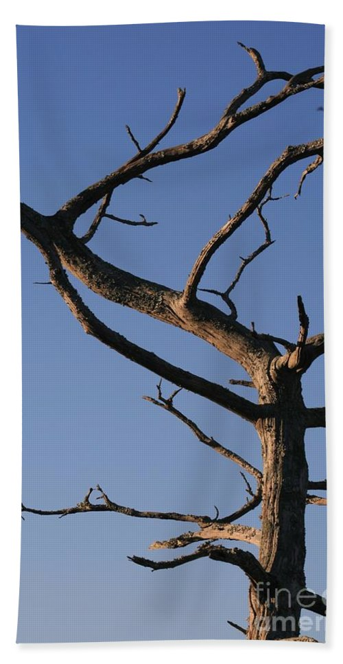 Tree Beach Sheet featuring the photograph Gnarly Tree by Nadine Rippelmeyer