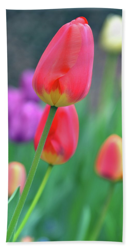 Tulip Beach Towel featuring the photograph Go Your Own Way by Angelina Vick