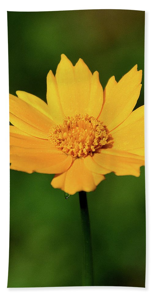 Ann Keisling Beach Towel featuring the photograph Gold In The Garden by Ann Keisling