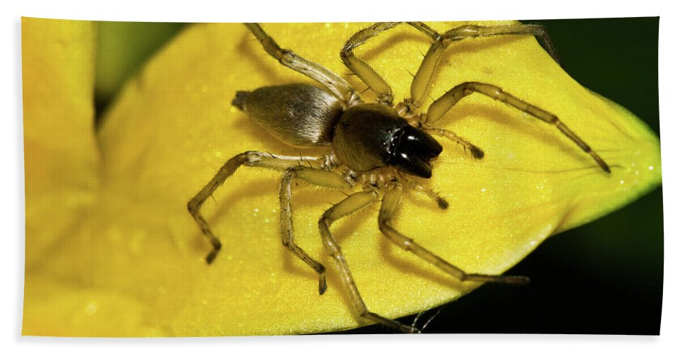 Spider Beach Towel featuring the photograph Golden Arachnid by Redjule Photography