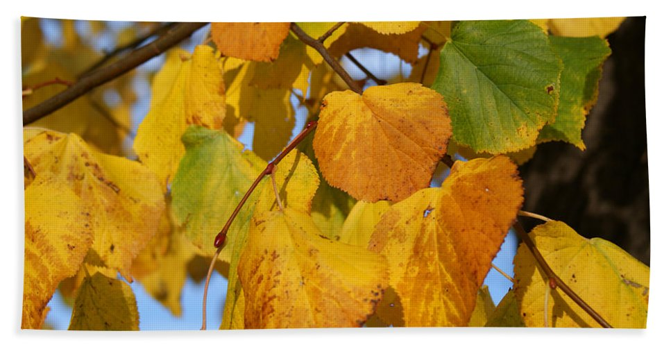 Autumn Beach Towel featuring the photograph Golden by Carol Lynch
