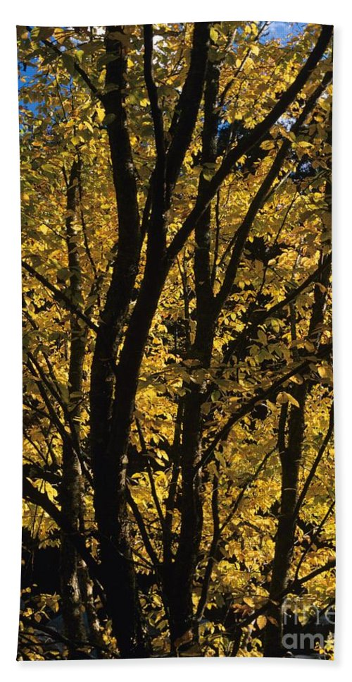 Autumn Beach Sheet featuring the photograph Golden Colors Of Autumn In New England by Erin Paul Donovan