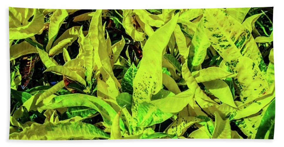 Tropical Beach Towel featuring the photograph Golden Croton by Louie Navoni