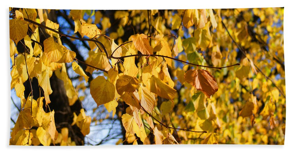 Autumn Beach Towel featuring the photograph Golden Leaves by Carol Lynch