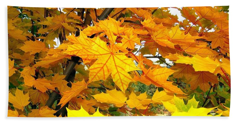 Autumn Beach Towel featuring the photograph Golden Moments by Will Borden