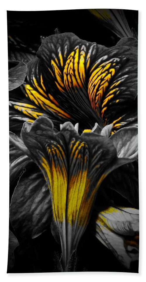Monochrome Beach Towel featuring the photograph Golden Paintbrush by Tim G Ross