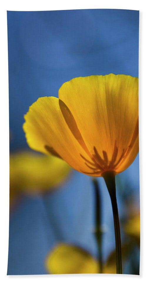 Poppies Beach Towel featuring the photograph Golden Poppy Reaching For The Skies by Saija Lehtonen