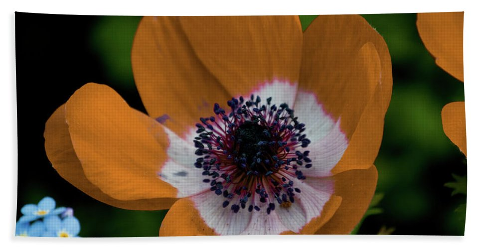 Gold Beach Towel featuring the photograph Golden Poppy by Trish Tritz