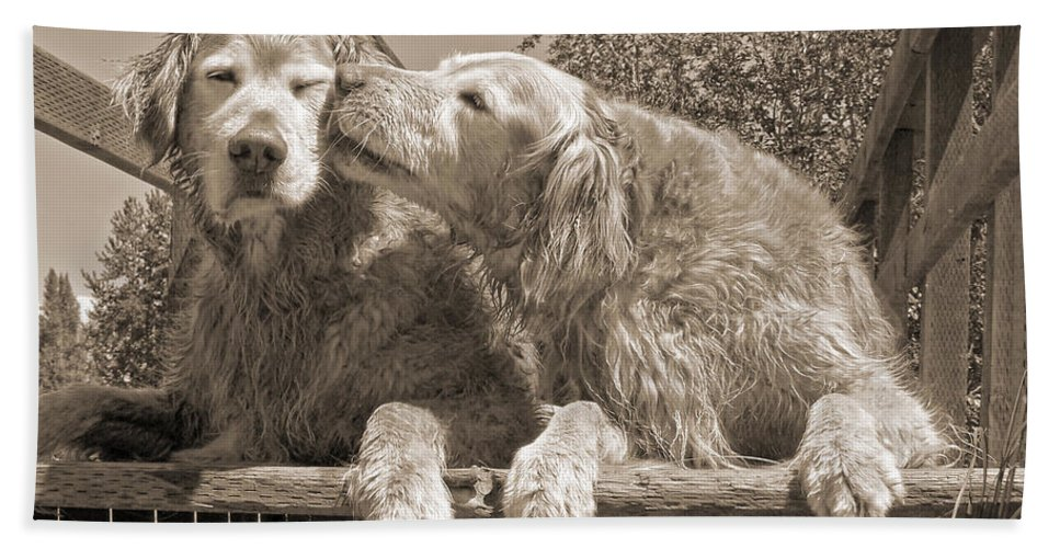 Golden Retriever Beach Towel featuring the photograph Golden Retriever Dogs The Kiss Sepia by Jennie Marie Schell