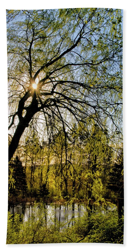 Golden Beach Towel featuring the photograph Golden Sunlight Through Green Tree by Christina Rollo