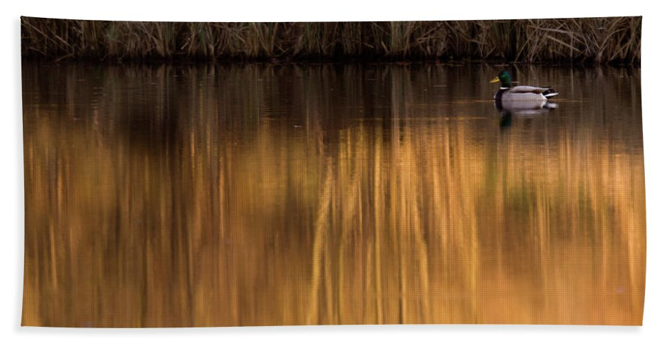 Gold Beach Towel featuring the photograph Golden Sunset by Angel Ciesniarska
