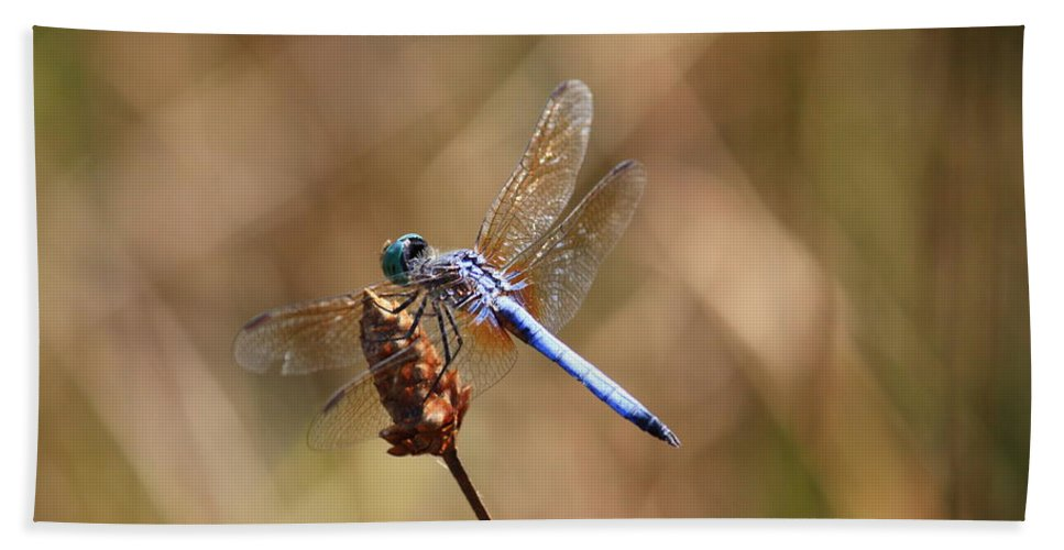 Dragonflies Beach Towel featuring the photograph Golden Wings by Carol Groenen