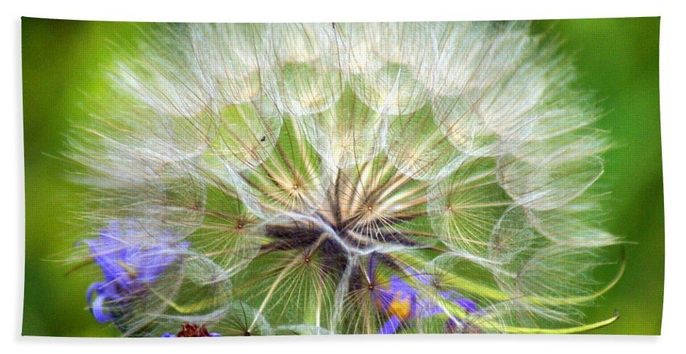 Beach Towel featuring the photograph Gone To Seed by Marty Koch