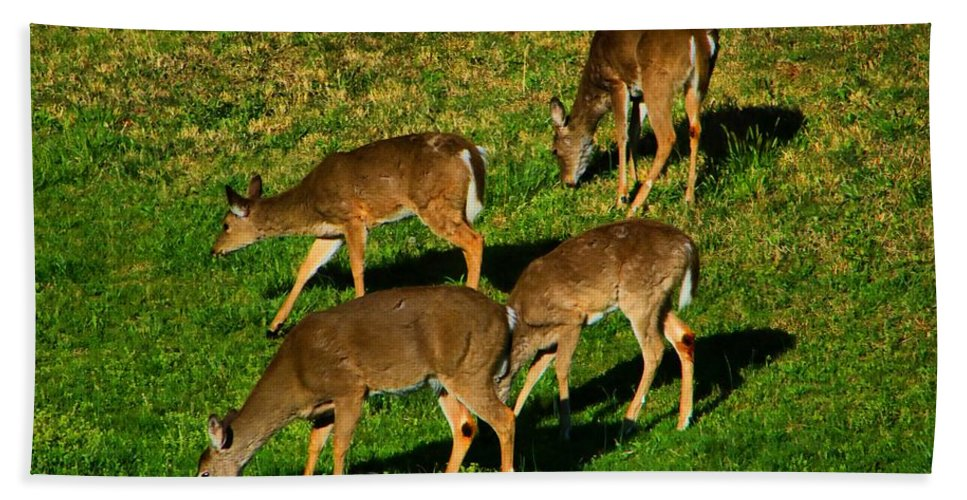 Deer Beach Towel featuring the photograph Good Morning Deer by Kathryn Meyer