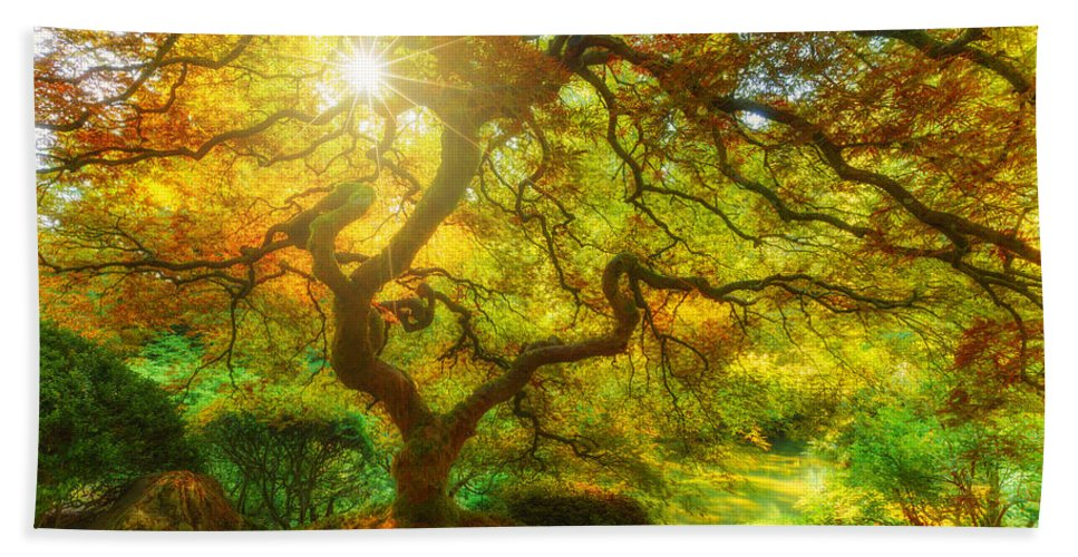 Trees Beach Towel featuring the photograph Good Morning Sunshine by Darren White