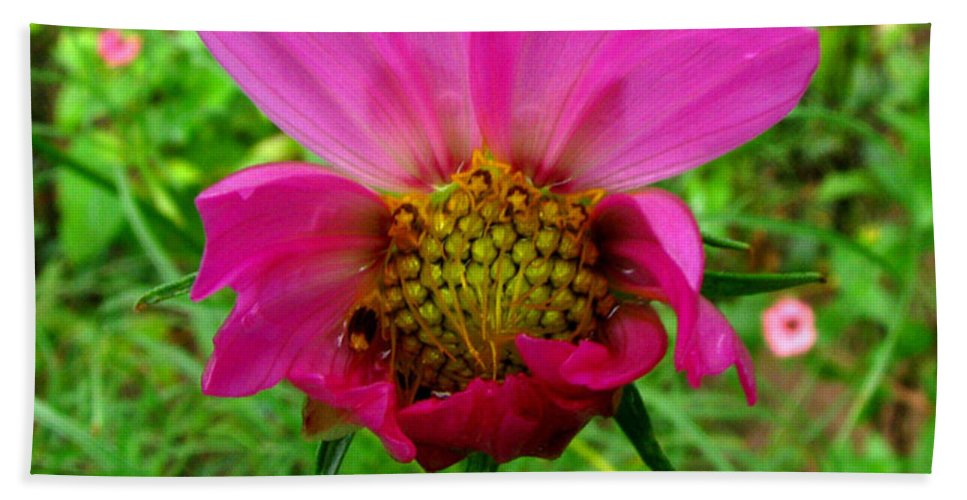 Wild Flower Beach Towel featuring the photograph Good Morning World by Donna Brown