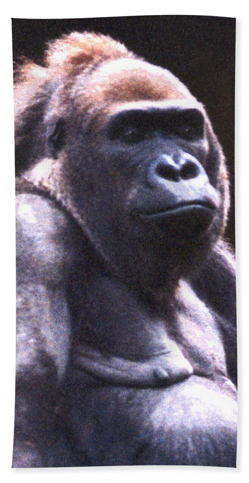 Gorilla Beach Towel featuring the photograph Gorilla by Steve Karol