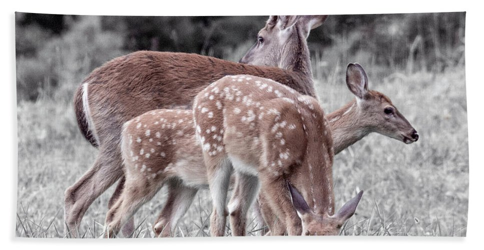 Deer Beach Towel featuring the photograph Humor Got Some Doe And Two Bucks by Betsy Knapp