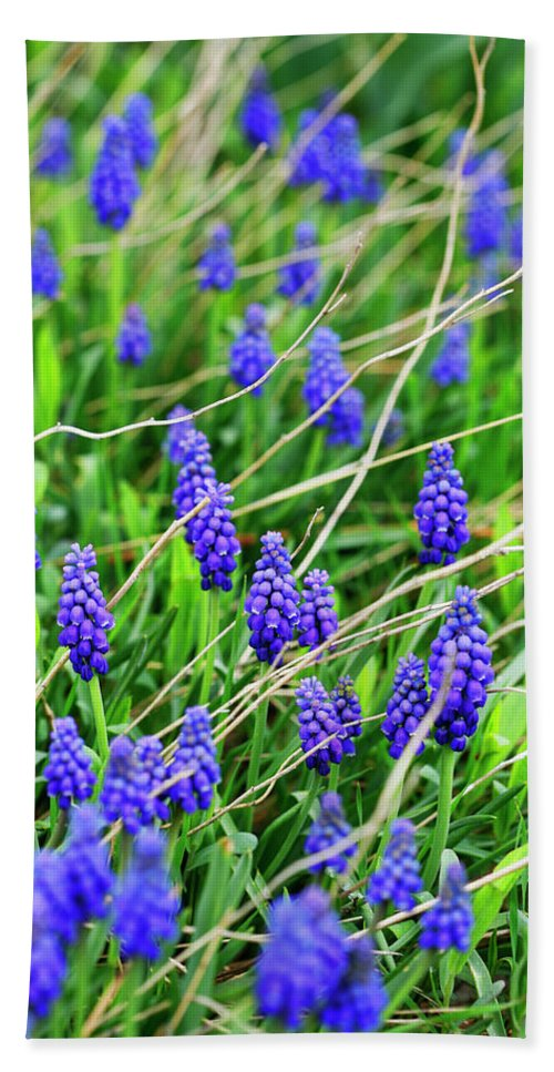Grape Beach Towel featuring the photograph Grape Hyacinth by Marilyn Hunt