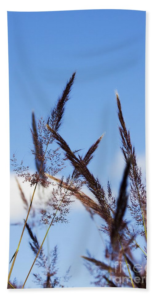 Blooming Beach Towel featuring the photograph Grass Florets by Jorgo Photography - Wall Art Gallery