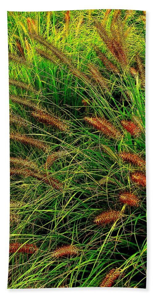 Grass Beach Towel featuring the photograph Grasses In The Verticle by Ian MacDonald